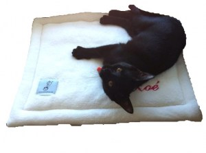 pack-chaton-tapis